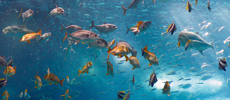 AQUARIUM PACKAGE  - Breakfast and 2 tickets for the Acquario di Genova included